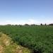 Proyecto fortalecerá la actividad agropecuaria de la irrigación Majes.