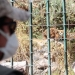 Los más de 100 días de cuarentena dejaron sin ingresos a Zoo Mundo, el único zoológico de Arequipa y ahora se requiere de la colaboración de todos para alimentar a los animales.