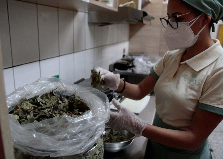 Proveedores de la selva envían matico para la preparación de las infusiones.