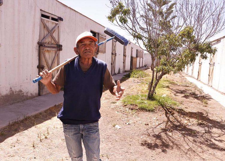 Nicomedes Cerdán es el jinete más longevo del hipódromo Arequipa y a pesar que no hay actividad, se resiste a dejar su trabajo.