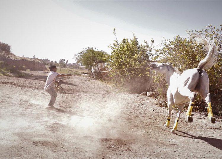 Los caballos llevan más de un año sin actividad, lo que les ha provocado estrés y algunas alteraciones musculares.