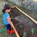 Poco a poco cientos de familias optan por crear biohuertos en casa.