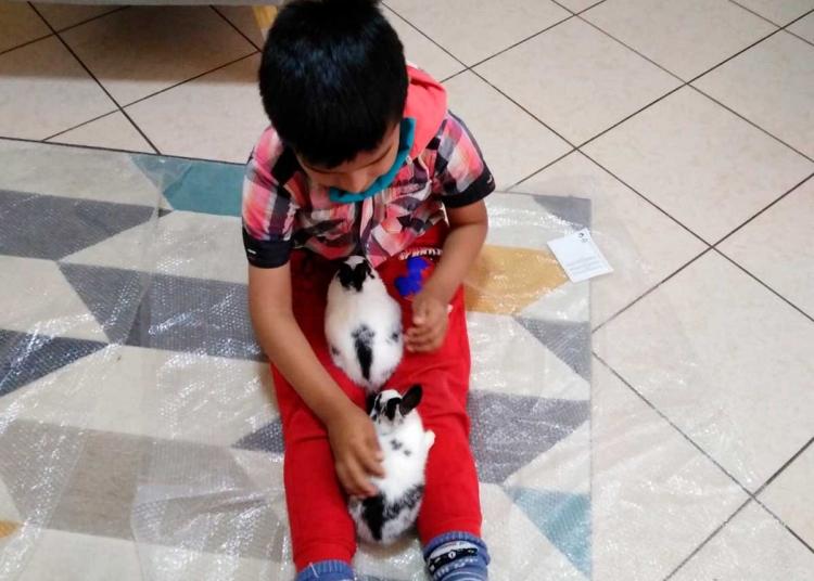 La interacción con los conejos, sirvió para que los pequeños mejoren su aprendizaje.