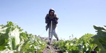 La agricultura es un importante sector productivo para Arequipa, pero también es una actividad sensible al trabajo infantil.